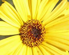 D174711A (RobHelfman) Tags: losangeles flowers kennethhahnstaterecreationarea