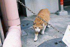 high-resistant cat (R_tungsten) Tags: film nikonf3 pro400h aisnikkor50mmf14