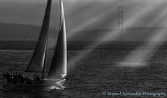 """Sun Beams of Light on  Sailboat"" (Marisol Fernandez Photography) Tags: sun sailboat bay blackwhite san francisco goldengatebridge sunrays beams marisolfernandezphotographyimages"