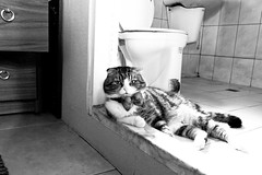 () Tags: bw monochrome digital cat blackwhite lx3