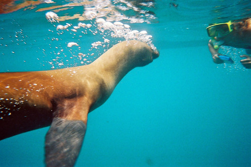 Sealion, Galapagos Islands