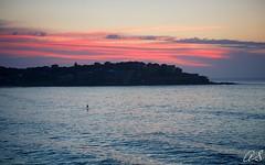 By one's self (Heatwaves Australia) Tags: colour beach bondi sunrise book paddle sup aaa canon5dmk3 arlsphoto