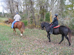 My Sister's Horses (bslook1213) Tags: ranch horses horse dog cats pets chickens chicken dogs farmhouse barn rural training cat fun photo yahoo google search women cowboy flickr image photos farm country riding pony land ponies cowgirl hog livestock horseback bing equine flickriver horsesfarm flickrhive flickrmind bingyahooimages