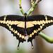Stratford Butterfly Farm_6