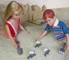 (14) The Inspection (Foxy Belle) Tags: sea summer beach scale swim vintage miniature doll play turtle barbie skipper suit story eggs 16 bathing swimsuit ricky bathingsuit diorama loggerhead hatching