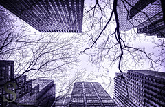 Looking through the branches- (Singing With Light) Tags: city nyc ny photography pentax k5 2013 singingwithlight ctfebruary