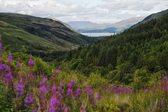 In Scotland (Luca Gerbino) Tags: uk flowers blue trees sky mountain lake mountains verde green nature water les alberi clouds montagne landscape lago coast la scotland los highlands rocks rboles nuvole blu united lac kingdom natura escocia vert falls des hills bleu highland ciel arbres le cielo nubes loch fiori montaa nuages paysage rocce acqua paesaggio colline rochers montaas montagnes montes ecosse collines scozia coste leau plateaux royaumeuni ctes hauts unito regno measach altopiani fallsmeasach