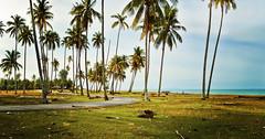Mangkuk Hayung (mohdhanafiah) Tags: sea panorama beach landscape village coconut laut malaysia kampung kelapa pantai terengganu pokok nikond3200 lanskap setiu afsdxnikkor1855mmf3556gvr kampungmangkuk mohdhanafiah