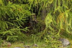 Ruinen der Schmelzra bei S-charl ( Von 1317 bis 1652 und dann noch einmal in der ersten Hälfte des 19. Jahrhunderts wurde Silber- und Bleierz abgebaut ) im Val S-charl im Unterengadin - Engadin im Kanton Graubünden - Grischun in der Schweiz (chrchr_75) Tags: chriguhurnibluemailch christoph hurni schweiz suisse switzerland svizzera suissa swiss chrchr chrchr75 chrigu chriguhurni 2013 bahn eisenbahn train treno zug 1310 oktober hurni131001 kantongraubünden graubünden grischun albumgraubünden albumzzzz131001ausflugsamnaunscharl albumbahnenderschweiz juna zoug trainen tog tren поезд lokomotive паровоз locomotora lok lokomotiv locomotief locomotiva locomotive railway rautatie chemin de fer ferrovia 鉄道 spoorweg железнодорожный centralstation ferroviaria