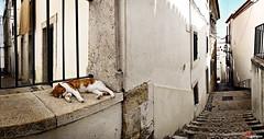 Lisboa. Vielas da Alfama. (Eugercios) Tags: portugal europa europe lisboa gato rua alfama gatinho lisbonne beco viela calleja callejuela vielas
