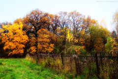 HFF! (grce) Tags: autumn trees nature grass forest fence landscape hff