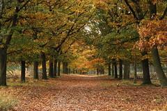 """Natuurgebied """"de Groote Heide"""" (ToJoLa) Tags: autumn nature canon landscape colours herfst natuur brabant heide herfstkleuren landschap natuurgebied ontrack 2013 brabantslandschap canoneos60d knooppuntroute heezeleende degrooteheide"""