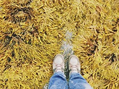 littoral (Arina Borevich) Tags: summer seaweed color feet me nature yellow outside person russia north traveller russian karelia 4s iphone somebody  littoral biologicalstation partofbody 2013 whitesea   wsbs russiannorth iphoneography  whiteseabiologicalstation iphone4s vscocam
