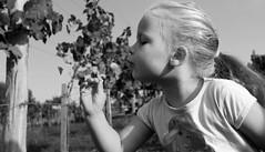 Panna (Andrs Gyrgy) Tags: bw white black flower canon ball blow dandelion blonde grape 600d grirl