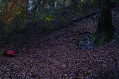 Red Bench (Uwe von Loh) Tags: autumn landscape sigma merrill foveon dp2