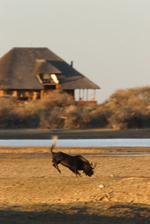Namibia Safari - Lake Lodge 10