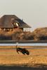 Namibia Safari - Lake Lodge 10