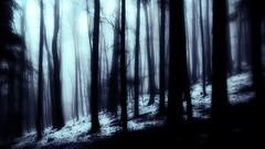 Black Black Black Forest (micagoto) Tags: forest wald schwarzwald blackforest