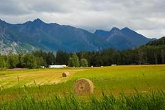 Hay bales in Palmer, AK (Mysophie08) Tags: alaska unitedstatesofamerica thumbsup haybales infocus highquality friendlychallenges herowinner pregamewinner palmerwasillaak