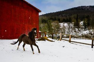 Romping through the snow [Explore]