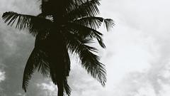 P6091366-4 (25 minutes) Tags: life street travel bw bali white black tree nature indonesia asia f14 snap omd 25mm streetsnap em5 omdem5
