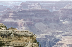 Braveheart in Grand Canyon! (Michele Cannone) Tags: usa man grand canyon brave