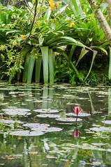 Rio's Zoo & Botanical Garden (Rodrigo Borato) Tags: trees brazil plants nature ecology animal rio brasil garden botanical zoo janeiro natureza boa vista botanic quinta eco ecologia zoologico