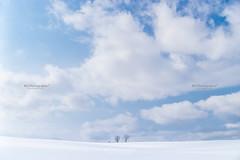 Biei. (bgfotologue) Tags: 2017 500px asia bgphoto biei blue hokkaido image imaging japan landscape outdoor photo photography sky snow sony tumblr white wide winter bellphoto tree 亞洲 冬 冬季 北海道 廣闊 戶外 攝影 日本 木 樹 白 美瑛 藍天 雪 雪地 風光 風景