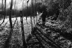 al mattino / in the morning (Vincenzo Elviretti) Tags: bianco e nero black white caccia bellegra lazio italia italy cona vaccarecce silhouette cacciatori gun rifle sun controluce sole