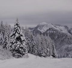 (sodorasodi) Tags: winter landscape snow ski snowboard ice cold tree mountain monochrome