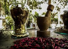 Medicina Natural (LucyInTheKsy) Tags: brasil brazil rio de janeiro jardin botanico botanic garden medicina natural medicine plantas plants plant planta