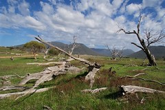 Dead trees and a few roos (Geoff Main) Tags: act australia autumn canong5x clouds deadtrees grassland gudgenbyvalley hill landscape namadginationalpark nationalpark