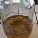 Cider making 10-30-2011 (39 of 57)