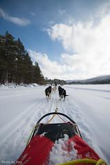 Run huskies~ (jimslam1) Tags: geilo norway winter tress lake snow running dogs sledding huskies
