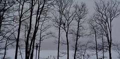 2017_0314Blizzard-Pano0001 (maineman152 (Lou)) Tags: panorama westpond snow snowstorm northeaster blizzard winter winterweather nature naturephoto naturephotography landscape landscapephoto landscapephotography march maine