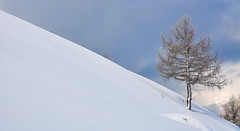 Winter minimal (luca2142) Tags: italy italia alpi alps alpiorobie valgerola larice larch nevefresca freshsnow neve snow rasura valtellina