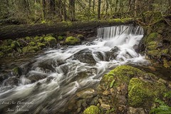 Celebrating the beauty of Vancouver Island on the first day of spring! (Freshairphotography) Tags: spring firstdayofspring vancouverisland sooke sookepotholespark waterflow water stream moss rocksandwater westcoast beautifulbc greens rainforest greatervictoria nature naturesart slowshutterspeed pacificmarinecircleroute explore explored