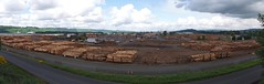Weyerhaeuser yard panorama (Sam Beebe, Ecotrust) Tags: panorama washington log forestry timber logs longview shipping weyerhaeuser export rawlogexport portoflongview