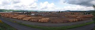 Weyerhaeuser yard panorama