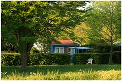 Springtime (17) (H. Bos) Tags: haven nature grass natuur gras lente springtime almere volkstuinen waterlandsebos vtvwaterland