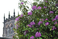 Flowers and Church (Cindy's sky) Tags: flowers flores primavera church spring bush purple iglesia lila churchyard arbusto