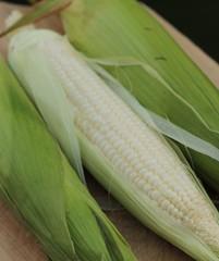 Corn (catherine4077) Tags: vegetables garden corn fresh produce homegrown