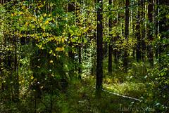 DSC_0923 (andrey.salikov) Tags: morning autumn fall landscape latvia september 1855 openair     2013