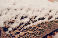 rested snow (-kenza) Tags: wood winter brown white snow cold tree nature outside bark stump trunk