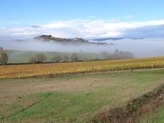Vigneti a Montalcino (cantineleonardodavinci) Tags: fog wine davinci hills winery vineyards leonardo montalcino nebbia cantina vino colline leonardodavinci vigneti