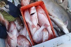 Coast Guard intercepts Mexican lancha poaching in south Texas waters (Coast Guard News) Tags: coastguard galveston fishing unitedstates corpuschristi tx falcon dauntless southpadreisland redsnapper uscg fisheries cbp customsandborderprotection