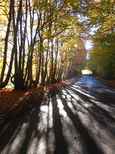 Autumn in Cumbria