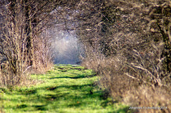 Feldweg (grafenhans) Tags: sony tunnel 55 tamron wald waldweg lichtung grafenwald slt55 5663200400