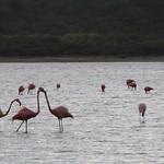 """Flamingopark <a style=""""margin-left:10px; font-size:0.8em;"""" href=""""http://www.flickr.com/photos/94191857@N07/11874891204/"""" target=""""_blank"""">@flickr</a>"""