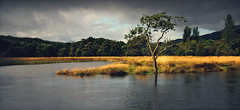 River Teith In Flood (Tamas Katai) Tags: cloud tree nature water rain river scotland highlands flood unitedkingdom gb callander teith